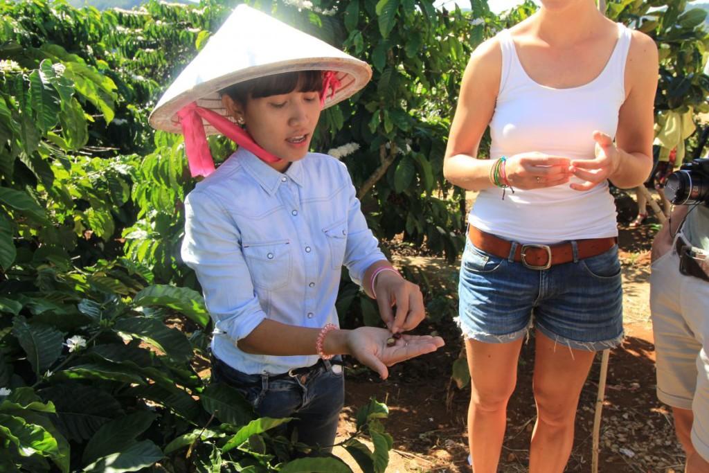 Da Lat coffee plantation