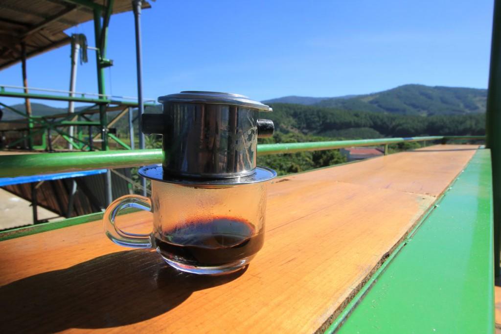 Da Lat coffee plantation 3
