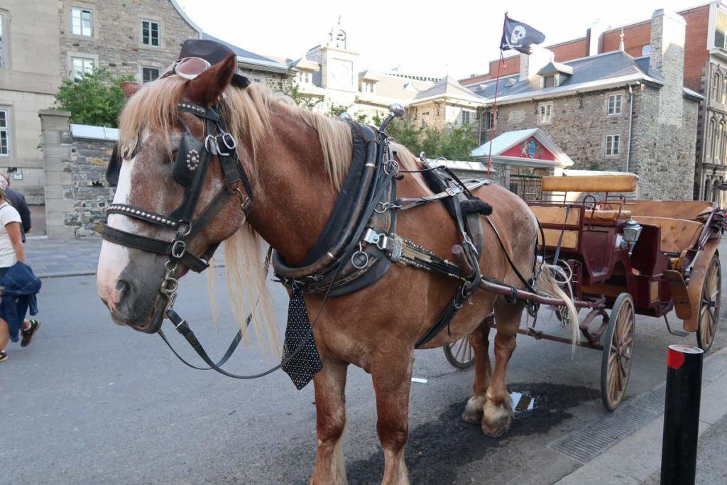 sightseeing-montreal-8-1024x683.jpg